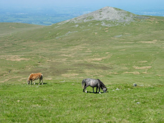 Ponies graze the wilderness in the Northern Carneddau region in Wales. Photo: Ian Nadin CC BY-SA 2.0 via Wikimedia Commons