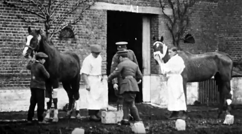 Blue Cross founded several animal hospitals in France during WW1.