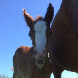 "Salvaging a horse's epididymal sperm: ""It's not too late"""