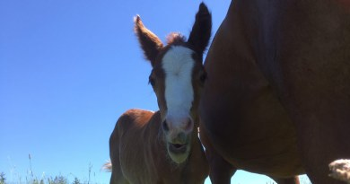 """Salvaging a horse's epididymal sperm: """"It's not too late"""""""