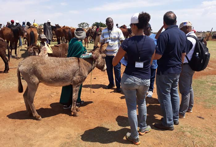 The case studies were followed by visits to communities working with World Horse Welfare. © World Horse Welfare