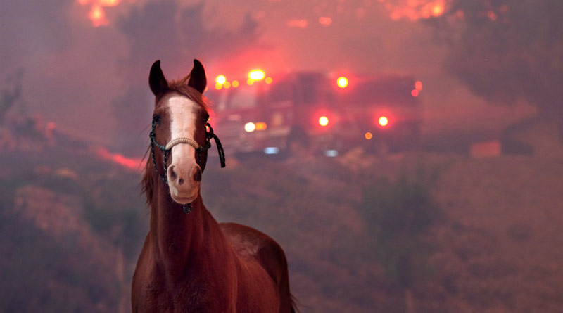 A horse is spooked as the Woolsey Fire moves through a property in Agoura Hills, California, on Nov. 9, 2018.