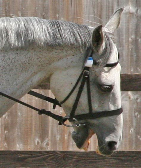 A catalogue of 24 behaviours in horses has been developed to help observers spot when a horse is exhibiting signs of pain.