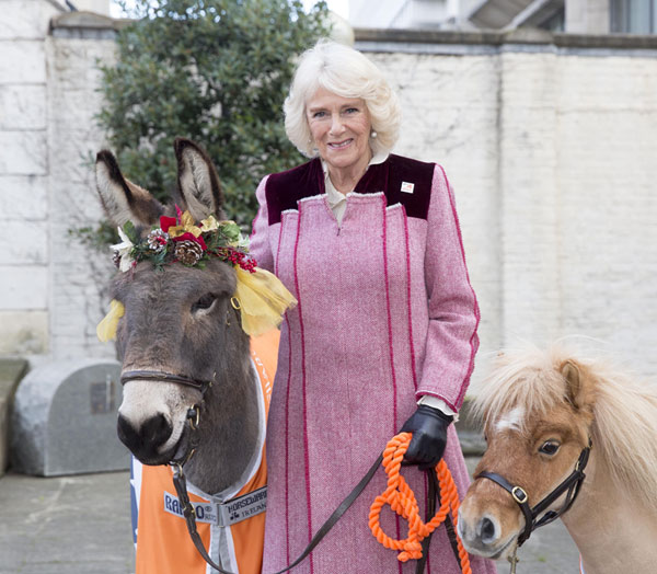 Camilla, theDuchess of Cornwall, with Ollie the donkey and miniature shetland Harry.