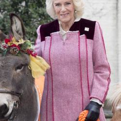 Camilla, the Duchess of Cornwall, with Ollie the donkey and miniature shetland Harry. © Ian Jones