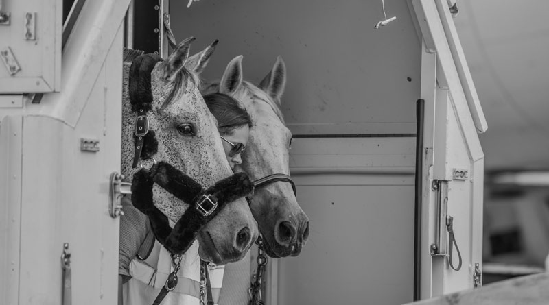 Horse arrivals in South Carolina, en route to the 2018 World Equestrian Games in North Carolina, USA.
