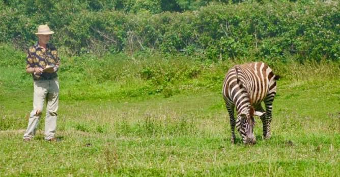 University of California, Davis, wildlife biologist Tim Caro observes zebra behaviour in response to biting fly annoyance. Photo: Joren Bruggink/Aeres University