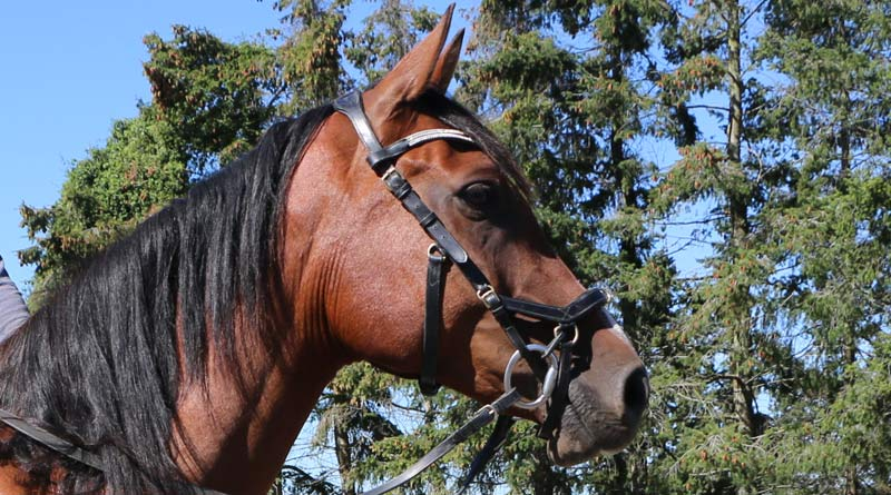 A Micklem multi-bridle in use.