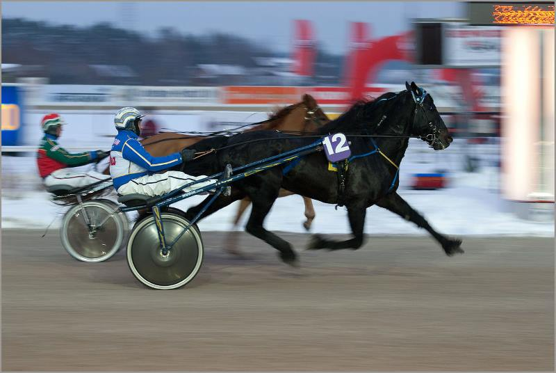 A coldblooded trotter of mixed Swedish and Norwegian lines. Photo: Don Wright CC BY 2.0