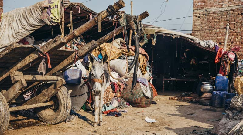 Donkeys used by waste pickers often hadhealth and welfare problems. Brooke/Freya Dowson