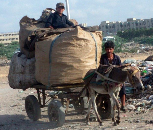 A typical donkey cart waste management team.