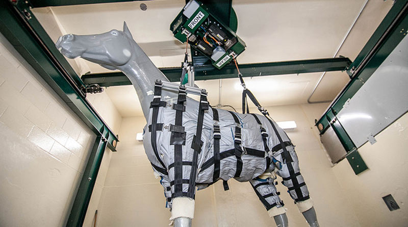 A rehabilitation lift and a harness system would use a computer-guided weight compensation system to help take some load off the horse's limbs during its recovery.