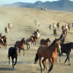 Wild horses at Return to Freedom's San Luis Obispo, California, satellite sanctuary. © Paloma Ianes