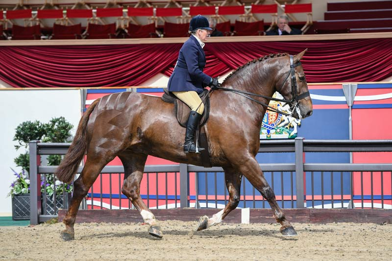 The Queen's Tower Bridge, ridden by Katie Jerram-Hunnable, was narrowly pipped in a strong heavyweight hunter class.
