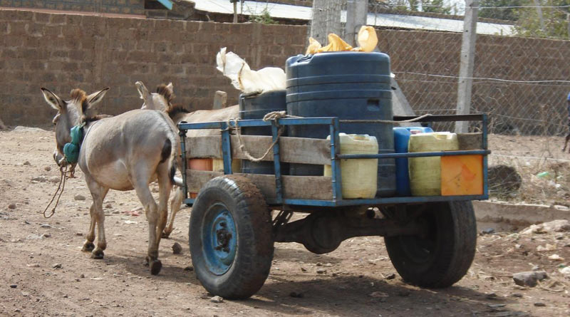 Donkeys may hold upwards of straight or indirect work inward production too commercial activities OIE steps inward to assist deal global ass peel trade
