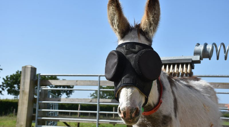 Jonty will wear his mask throughout the summer to protect his eyes from the sun.