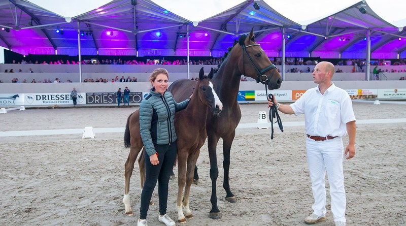 Ovation (Imposantos x Quantensprung) sold for €35,000 at the inaugural Borculo CDI Foal Auction in The Netherlands at the weekend.