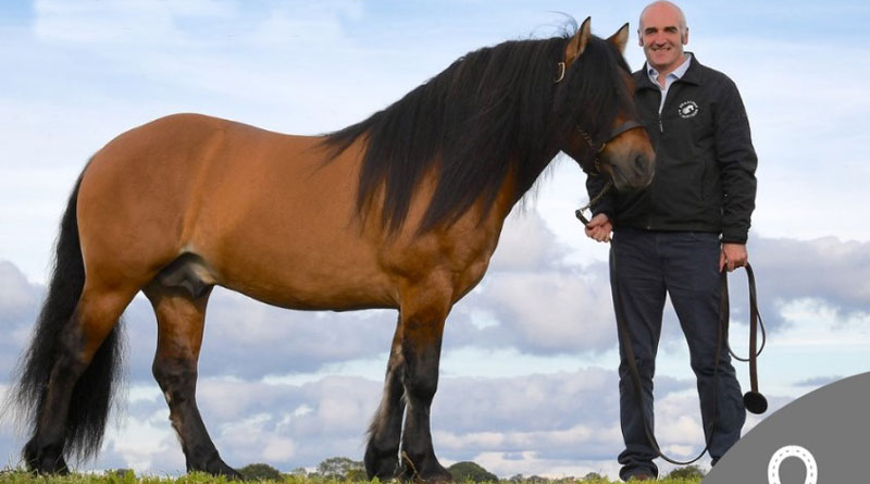 Tullis Matson is the new president of Britain's Equestrian Employers Association.