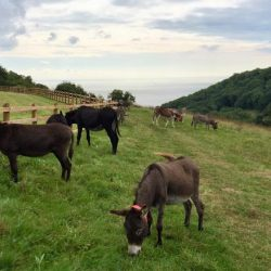 A herd of 40 donkeys are going natural in a new grazing trial. © The Donkey Sanctuary