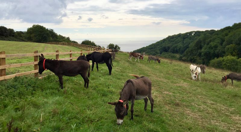 A herd of 40 donkeys are going natural in a new grazing trial.