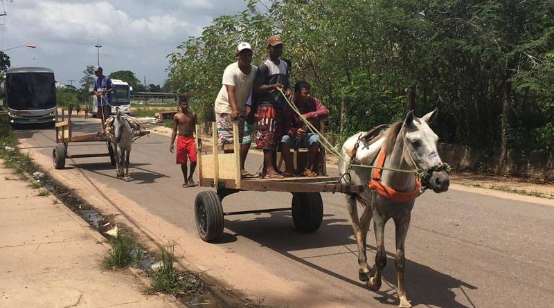 Cart horses in Belem, Brazil, often work up to 16 hours a day.