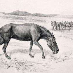 An artists impression of Hippidion, from  W.B. Scott's 1913 book, A History of Land Mammals in the Western Hemisphere. Image: Robert Bruce Horsfall