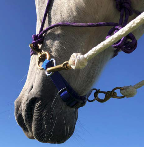 PARELLI NATURAL HORSEMANSHIP EASY-DOES-IT *PURPLE* ROPE REINS for ENDURANCE