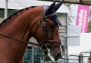 Video: Paul McGreevy on nosebands and tongue ties, and horse sport's social licence
