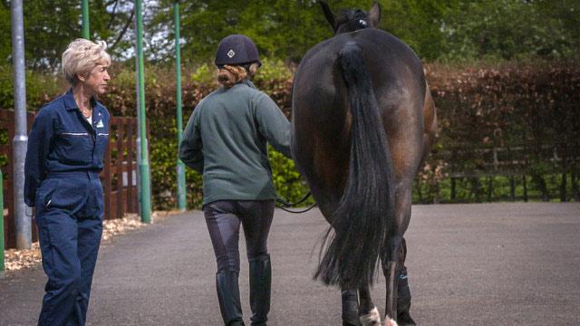 Dr Sue Dyson assessing a horse.