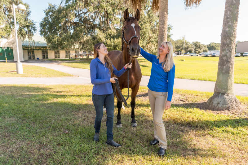 Warmblood dressage horse Casino Royale was treated at the University of Florida in 2016 and 2017. He's pictured with his owner, Danielle Ammeson, at left, and Dr Allison Morton, a UF equine surgeon