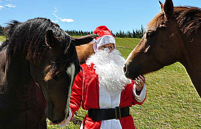 Christmas Gift Ideas For The Equestrian With Everything