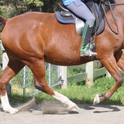 Game-changer for detecting atrial fibrillation in horses