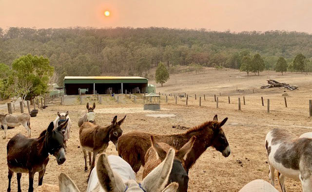 Drought and now bushfires has meant the Good Samaritan Donkey Sanctuary In New South Wales is facing a tough road.