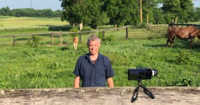 Parasites take on starring role in equine film awards
