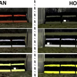 How horses see the world: Jump colours need a rethink, say researchers