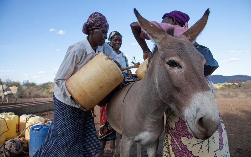 Jasmine loads her donkey at a water point at Nuu, a village near Mwingi in North East Kenya. During drought women have to travel longer distances to obtain water for their families and animals. A donkey will carry 100kg of water. A woman can manage only 25kg so life without a donkey can become intolerable.