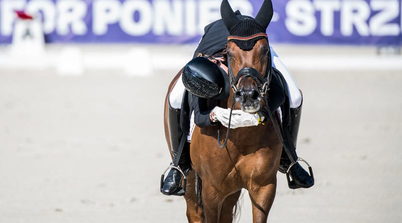 Researchers interviewed 36 international elite equestrian athletes from six disciplines about their relationships with horses.