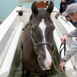 Renowned British dressage horse Valegro uses the Animal Health Trust's water treadmill. The AHT has worked with Hartpury University and Centaur Biomechanics to research the short and long-term effects of water treadmill use. © Hartpury University / AHT