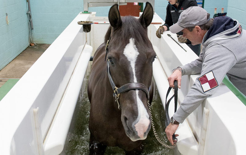 Renowned British dressage horse Valegro uses the Animal Health Trust's water treadmill. The AHT has worked with Hartpury University and Centaur Biomechanics to research the short and long-term effects of water treadmill use.