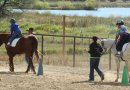 Researchers to explore why therapeutic horse riding helps children with autism
