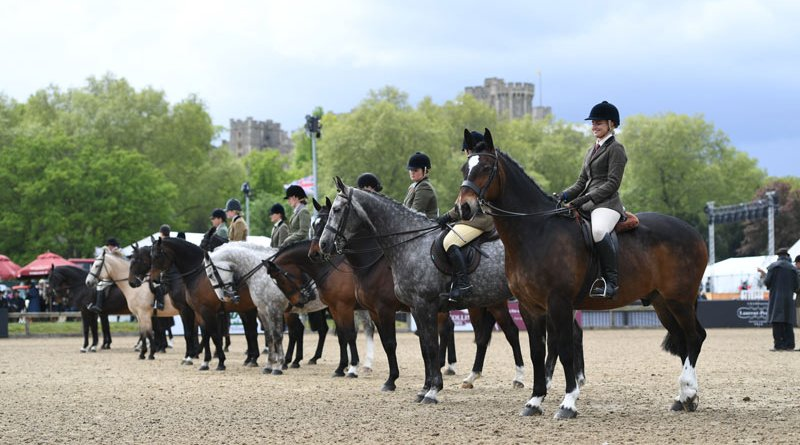 Online Showing is quite a different experience from a visit to Royal Windsor Horse Show, where the judge has the opportunity to take in your animal from all angles, and mark conformation, temperament and ride together.