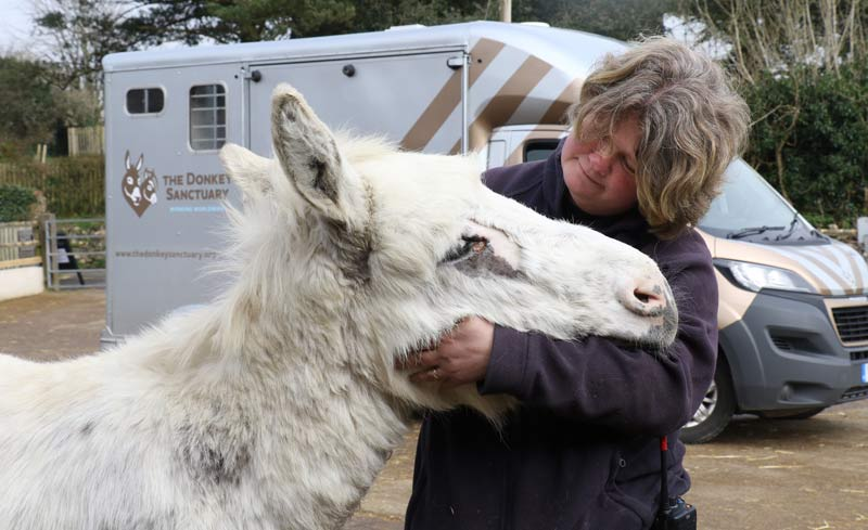 Snowy with groom Kelly Bramley after his surgery to remove a sarcoid from near his eye.