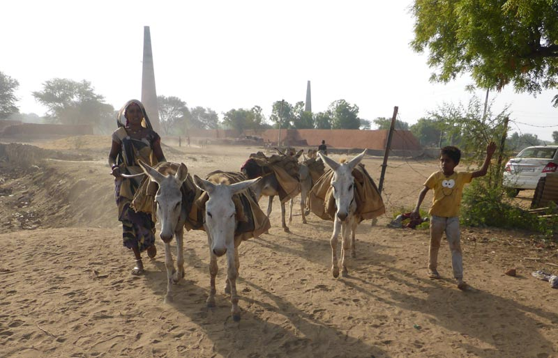 Research has highlighted the consequences of misprescribed medicines to equids in northern India.