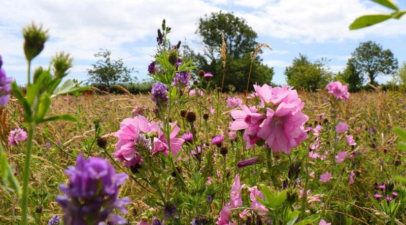 The Donkey Sanctuary's grounds have become a riot of colour as nature blooms in its wild spaces.