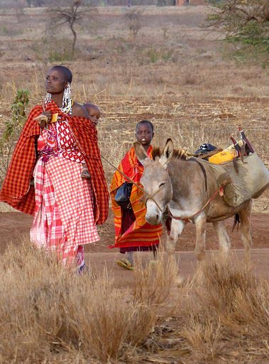 "Donkeys have been described as "" the original sustainable power source, purpose built for their environment, and transport millions of people each day, enabling access to clean water, education, healthcare and medical supplies, and markets""."