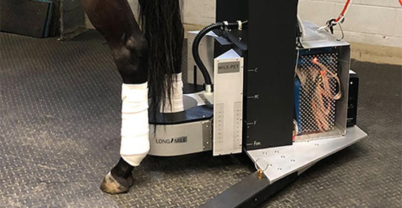"The ""Milepet"" (Molecular Imaging of Limbs in Equids) PET scanner in action."