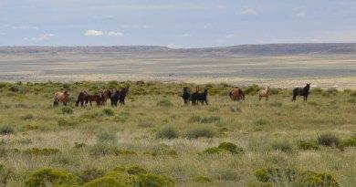 Study reveals 32 distinct breeds among Navajo Nation horses