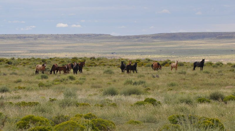 Horses in the Eastern Navajo Agency of Northwestern New Mexico.