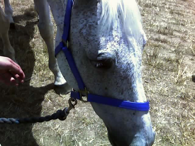 Subzero, who has died at the age of 31.
