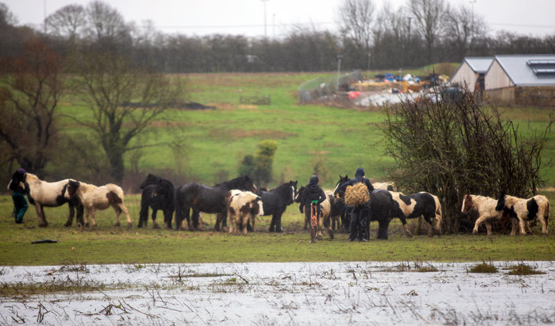 Ponies were being fly grazed on the large site, which was flooded.